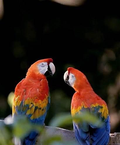 Naturaleza Movimiento Gifs Gifmaniacos Birds Parrot Brutal