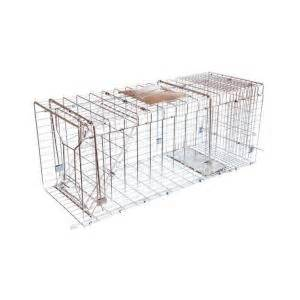 cat traps home depot jt eaton answer single door live animal cage trap for
