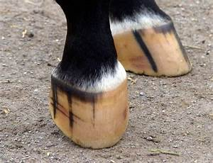 Physical Exam Of The Horse Hoof  U2013 The Horse