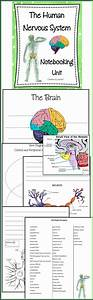 89 Best Worksheets And Quizzes Images On Pinterest
