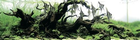 Aquascaping Materials by Amazing Aquascapes From The Iaplc 2014 Practical