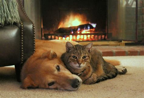 dogs for fireplaces fall comforts of home they are important even if you re
