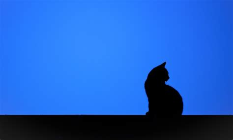 cat silhouette wallpaper gallery