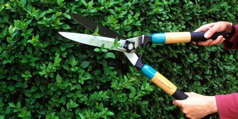 how to trim a bush get ready to spring forward lifescape