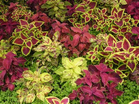 Florida Landscaping Plant Red Leaves, Landscaping Business