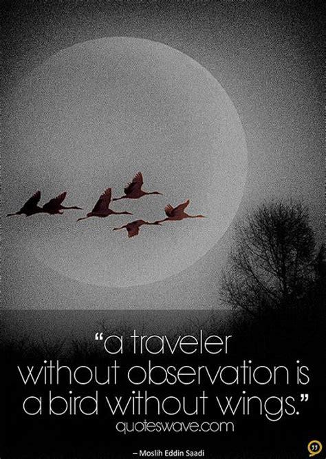 traveler  observation   bird  wings