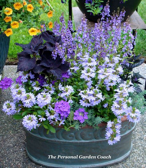 beautiful container gardening flowers ideas   home front porch plants garden