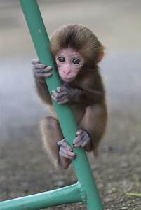 Adorable Baby Monkey Wallpapers | celebrity