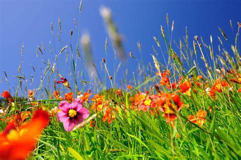 Blumenwiese Englisch blumenwiese englisch blumenwiese bunte blumen viele blumen