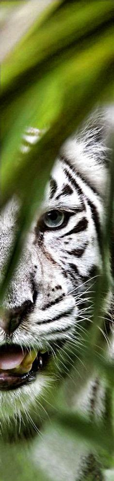 Tiger Burning Bright Style Pinterest