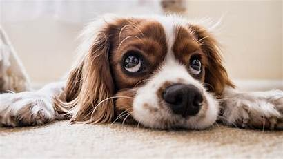 4k Funny Animals Puppy Wallpapers Pets