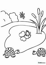 Pond Coloring Worksheets Water Clipart Ausmalbilder Heart Lily Template Clip Templates Designlooter Library sketch template