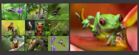 costa rica wildlife photography workshops