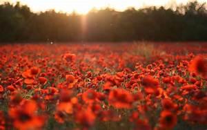 Beautiful Red Flowers Wallpaper 210 2560 x 1600 ...