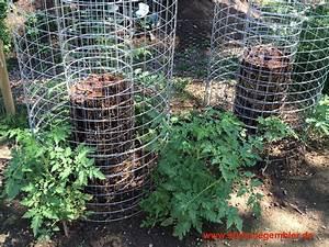 Tomaten Im Hochbeet : tomaten anbauen tomaten anbauen tomaten und plaetzchen ~ Whattoseeinmadrid.com Haus und Dekorationen