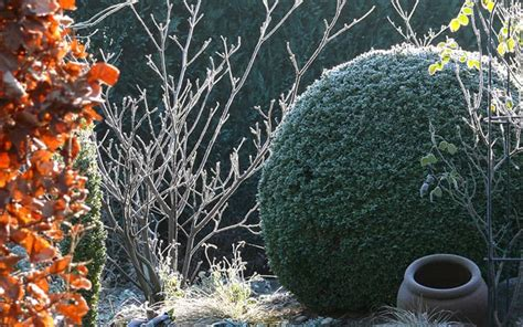 Gardeners Winter by How To Protect Garden Plants From Winter David Domoney