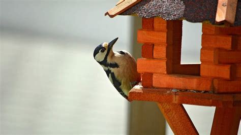 how to keep woodpeckers away repel pest birds