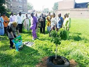Urban Garden Planned for Chatham   Chicago Citizens ...