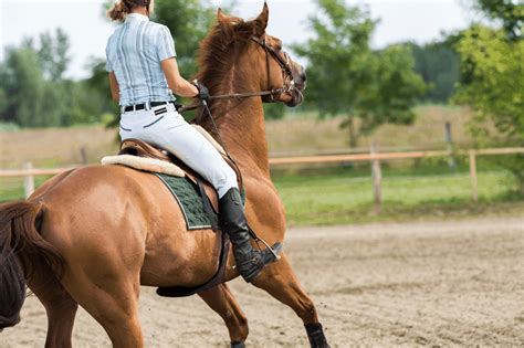 horse breed beginners calmest which riding rider