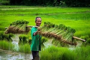 Transplanting Rice Seedlings By Lee Craker On 500px