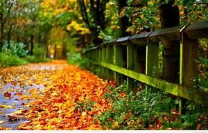 Autumn, Wallpaper, Widescreen, U00b7, U2460, Download, Free, Amazing, High