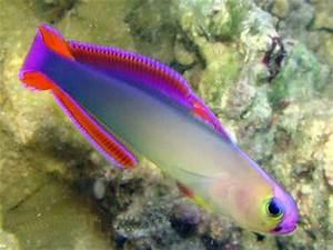Salt Water Fish s ly At Feldman s Aquarium