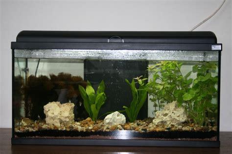 aquarium aquatlantis aquadream 80 nouveaux et installation d un aquadream 80