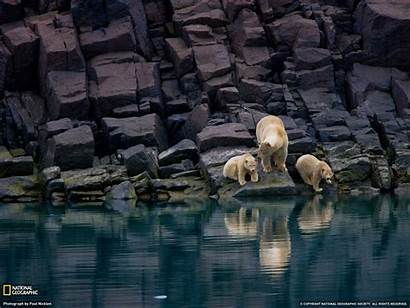 Geographic National Breathtaking Wallpapers Geo Nat Animal