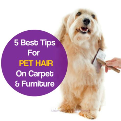 how to remove dog hair from sofa remove pet hair from carpet carpet cleaning manchester