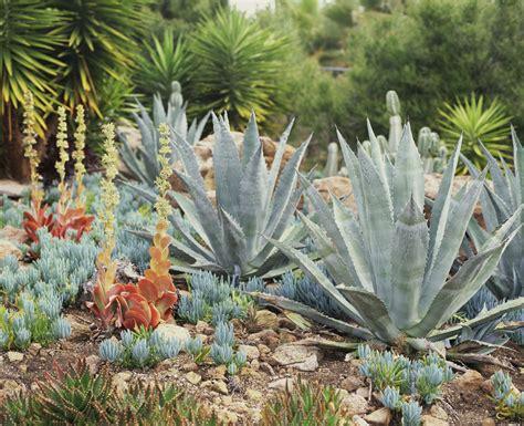 drought resistant landscape approach  xeriscape plants