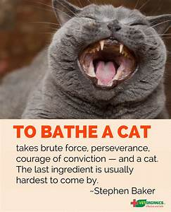 How to bathe a cat boca raton news most reliable source for Can you train a cat to go outside for bathroom