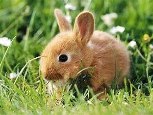 Cute rabbit wallpaper ~ unique animal wallpapers