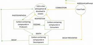 The Carbon Cycle  U2022 A  Biology