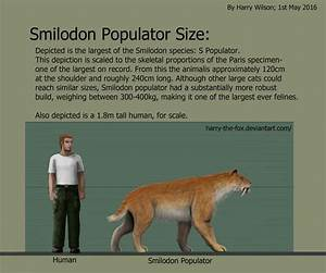Smilodon POPULATOR size comparison. by Harry-the-Fox on ...