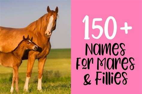 horse names horses female mares fillies tips helpfulhorsehints barn unique naming male stallion