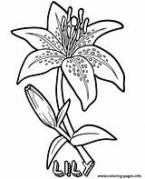 Coloring Flower Lily Printable Flowers Sheets Sheet Lilies Drawing Dekuz Photographia Coloringfolder sketch template