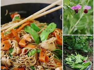 Herbe à Curry Toxique : les meilleures recettes de wok et carottes ~ Melissatoandfro.com Idées de Décoration