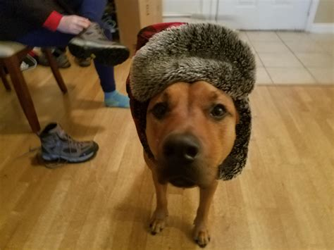 Doggo With His Hat Dogswearinghats
