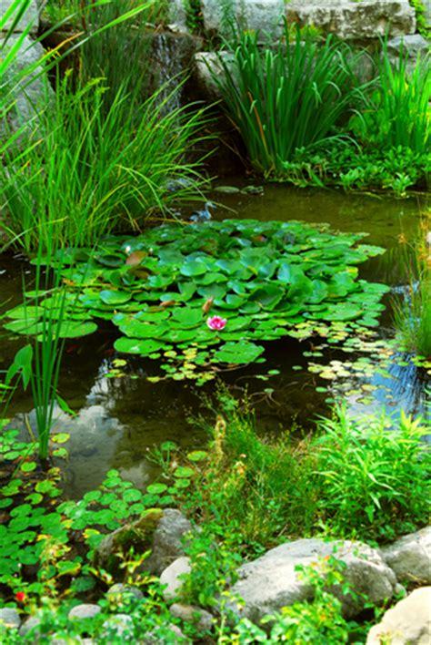 Garden Fish  Pond Plants  Garden Fish