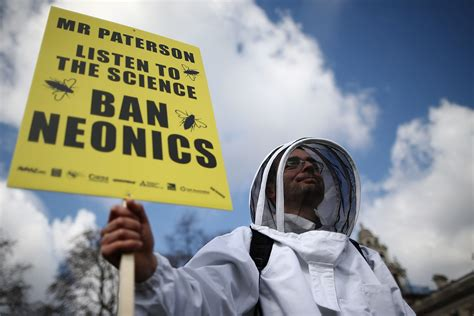 bee colony collapse disorder facts  economic impact