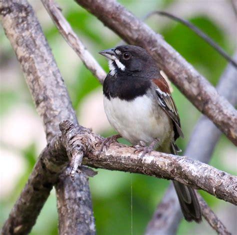 december 2 8 mexico 2 dutch birding
