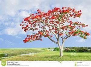 Baum Mit Roten Blättern : baum mit roten orange blumen stock fotos melden sie sich kostenlos an ~ Eleganceandgraceweddings.com Haus und Dekorationen
