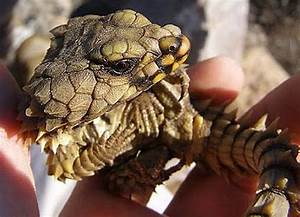 pet pages reptiles for sale k--k.club 2017