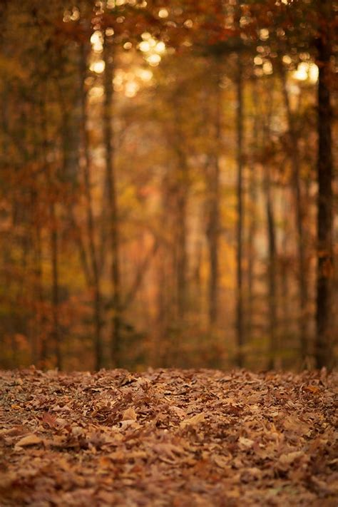 Aesthetic High Resolution Fall Backgrounds by Kcc Fall Digital Background Backdrop Instant