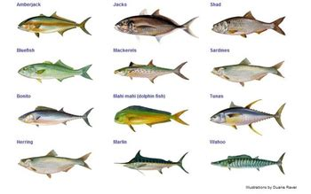 Names Of Fish To Eat  Do You Like To Eat Different Types Of Fish? Haddock  Baked Fish