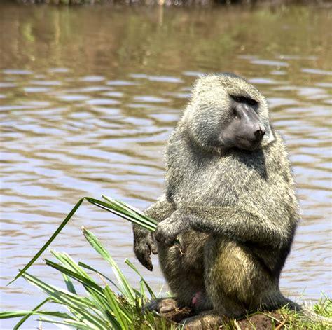 Beautiful African Animals Safaris Wildlife Of Africa