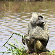 Endangered African Wild Animals