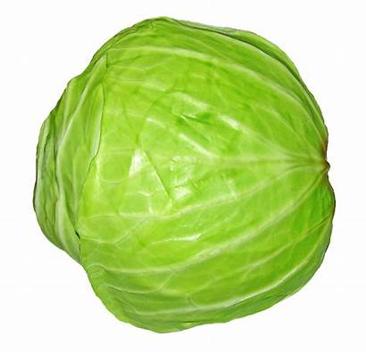 Cabbage Nigerian Pnghunter