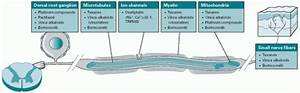 Pathophysiology Of Chemotherapy