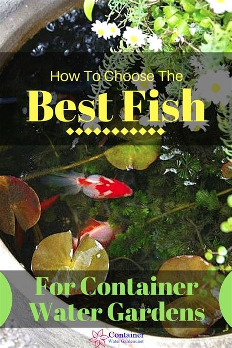 fish  container water gardens container water gardens